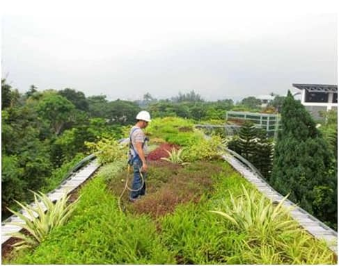 How To Make A Green Roof?